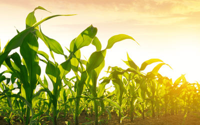 Mycotoxin Forecast for the Rest of 2021